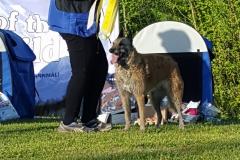Alpha BIS 3 at breedspecial at IVÖ 150514
