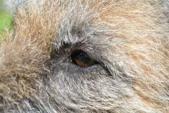 Closeup Alphas eye