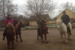 Out riding iclendic horses with the family